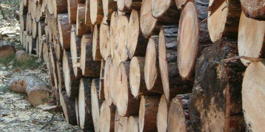 Дрвото можеби грее најевтино и најубаво, но е тивок убиец