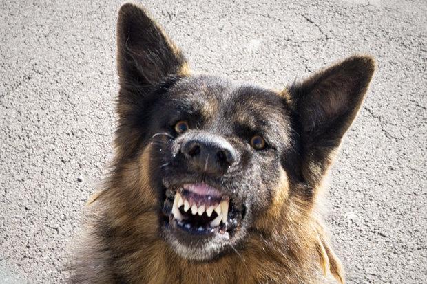 Тројца скопјани вчера каснати од кучиња скитници на три различни локации