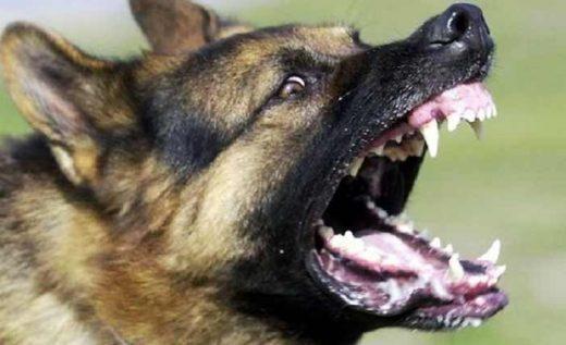 Двајца скопјани вчера каснати од кучиња скитници во Шутка и Ново Лисиче