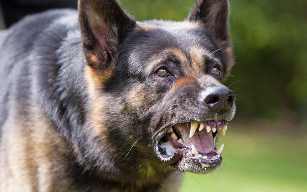 Двајца скопјани вчера каснати од кучиња скитници