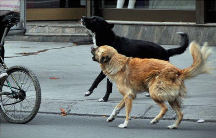 Девојче искасано од куче скитник