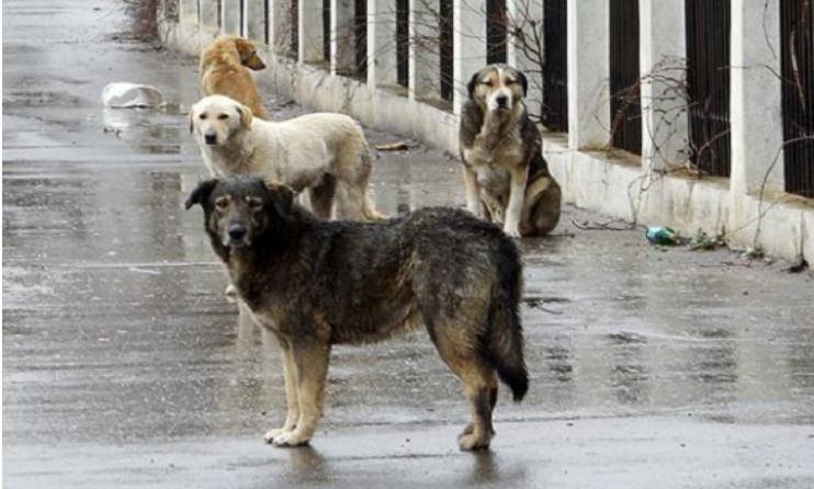Градските власти пребројале 2.500 улични кучиња во Скопје