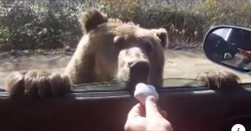 И мечките сакаат колачиња