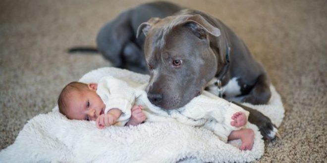 Питбул спасил бебе од запален стан: Со забите ја влечел за пелената!