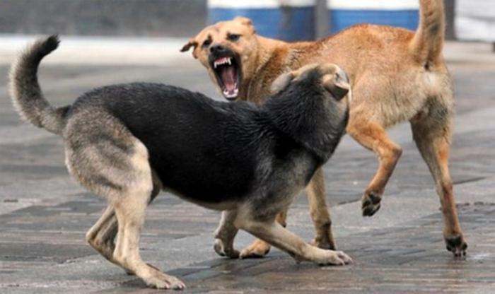 Кучиња скитници нападнаа дете и маж