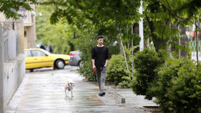 Забрана за шетање на кучиња