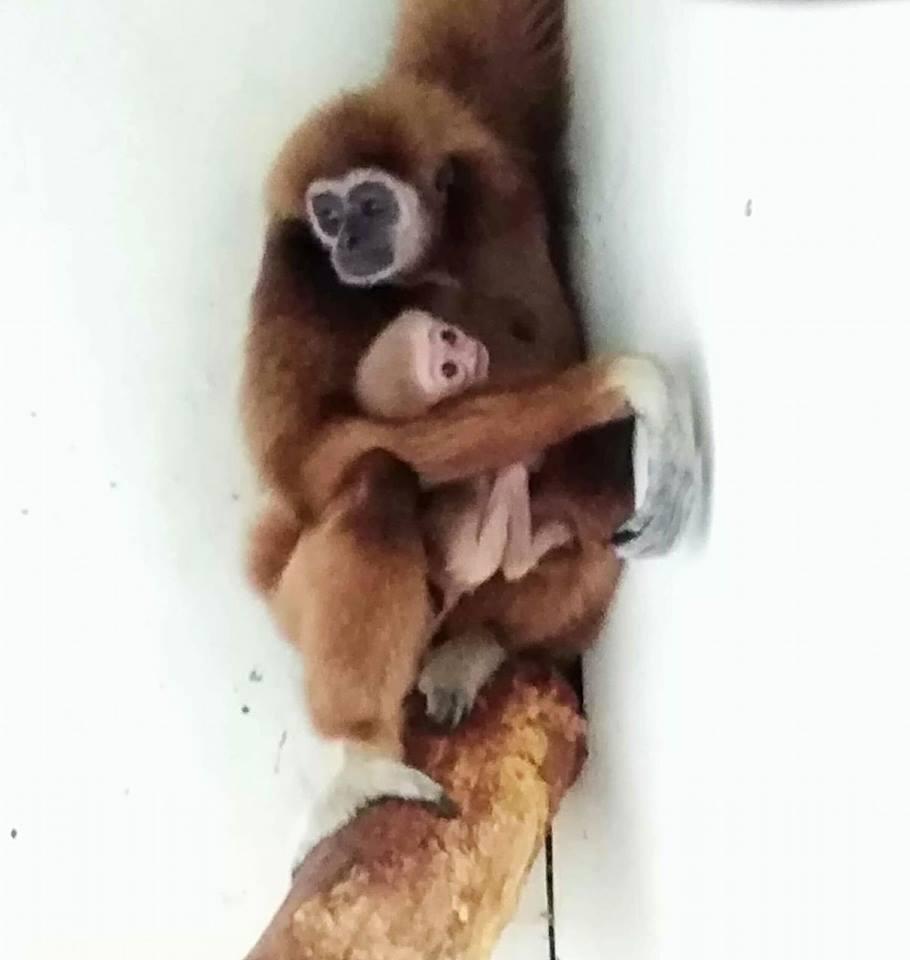 Радост во Скопската ЗОО: Мама Бетка со бебуш