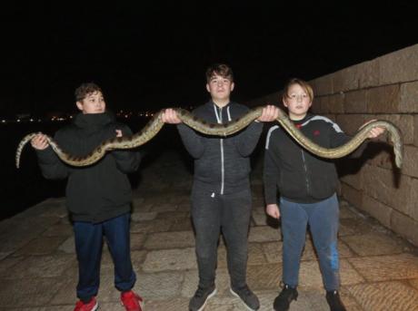 Пет деца од морето во Хрватска извадиле анаконда долга 2,5 метри