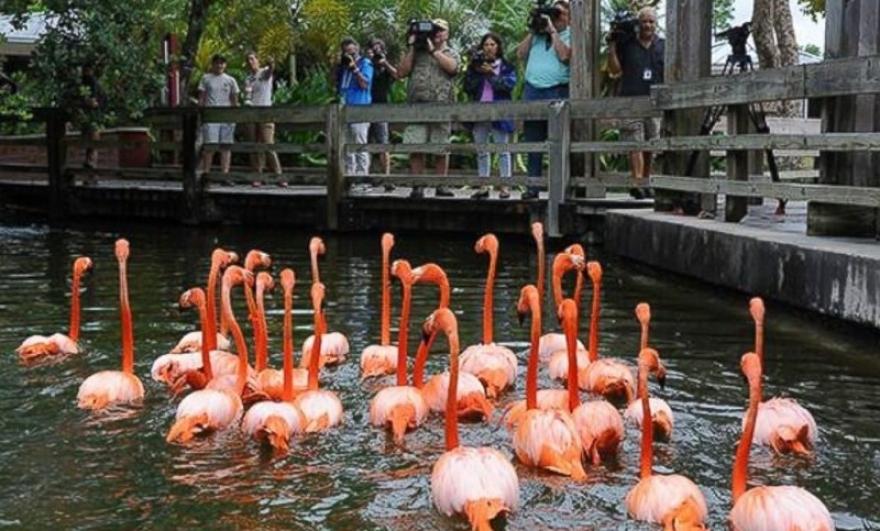 Зебри, фламинга, пингвини – во ЗОО треба да пристигнат нови жители