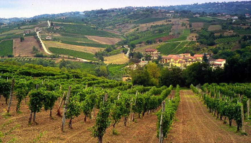 Поради климатските промени традиционалните македонски сорти грозје цветаат две недели порано
