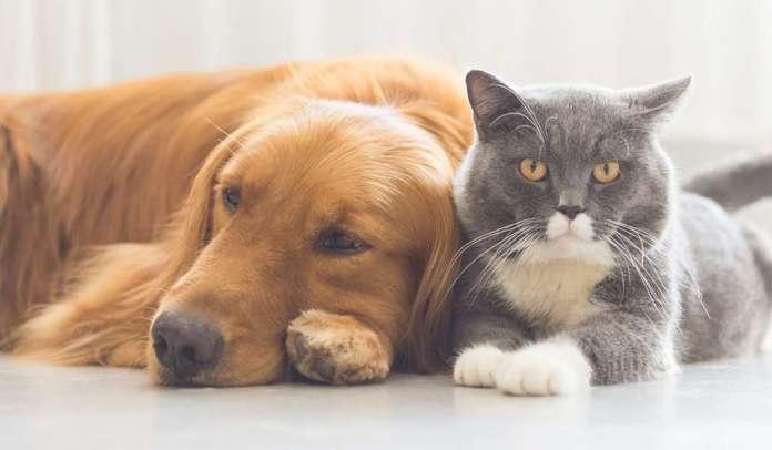 Се пролонгира рокот за чипирање на милениците до 31 декември