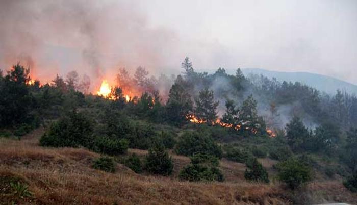 Пожар близина на Патишка Река