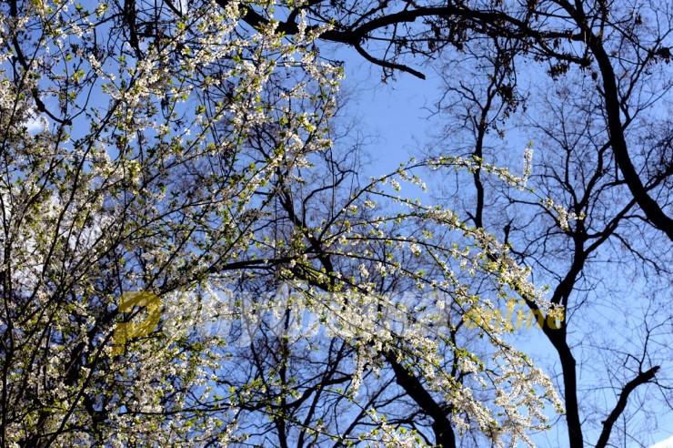 Пристигна пролетта на северната хемисфера