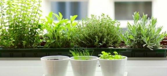 Секоја градина или балкон мора да има босилек, рузмарин и магдонос