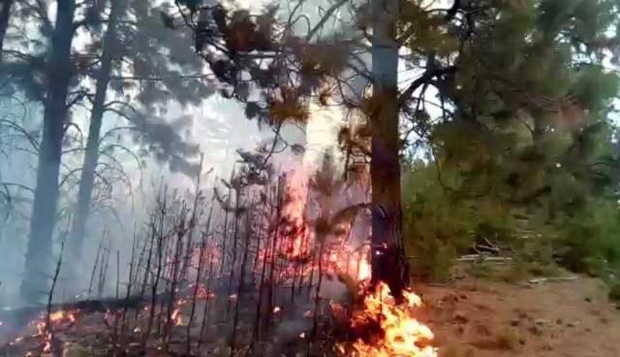 Над 50 хектари шума зафатени во пожарот кај кочанското село Цера на Осоговските Планини