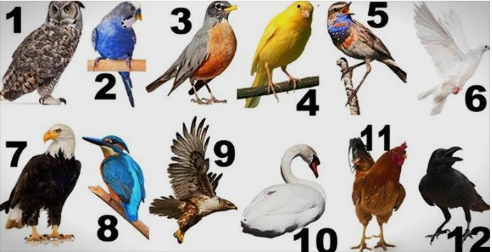 Птицата на вашиот месец на раѓање ја открива судбината која ве чека