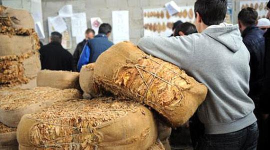 Хоџа: Откупната цена на тутунот нема да биде под 180 денари