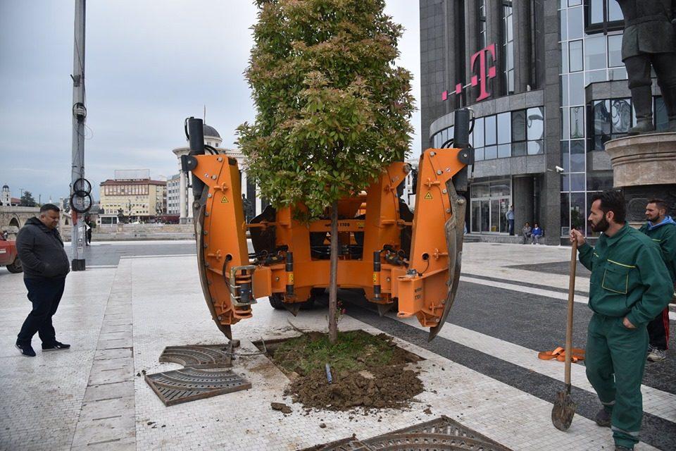 Денеска повторно беа засадени дрвјата кои беа отстранети за литургијата на Папата