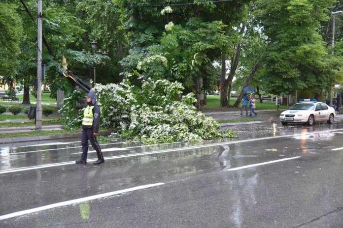 Силниот ветер сруши дрво во центарот на Скопје (ФОТО)