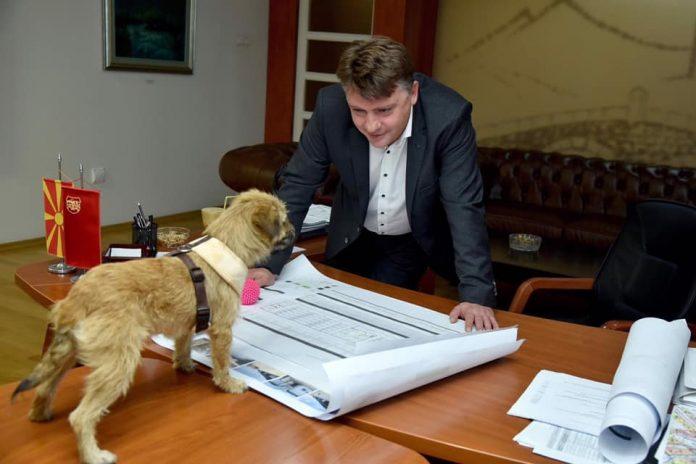 Шилегов нуди куче за вдомување