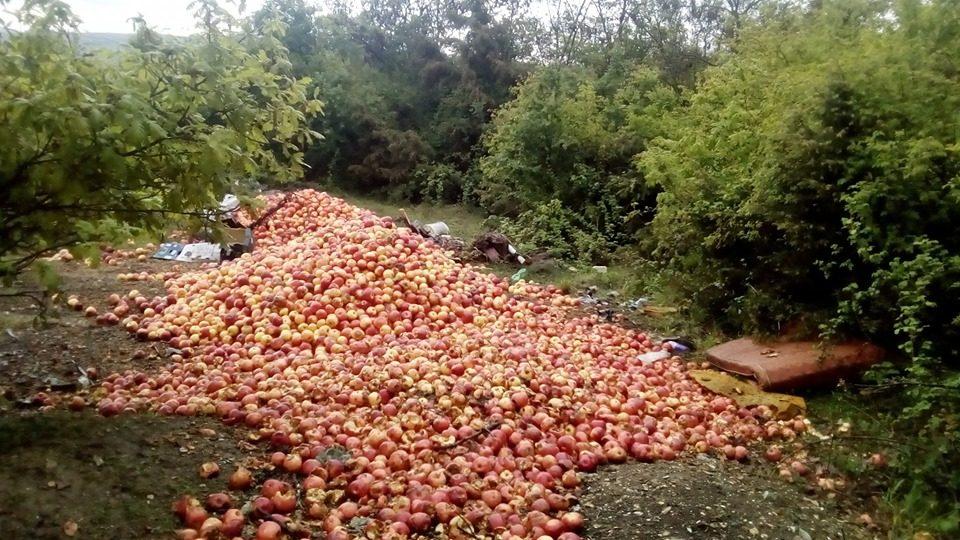 Земјоделците го фрлаат својот род бидејќи нема откуп