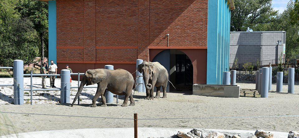 Од 50 до 150 денари ќе се плаќа билет во Зоолошка, поскапува оти слоновите јаделе многу!