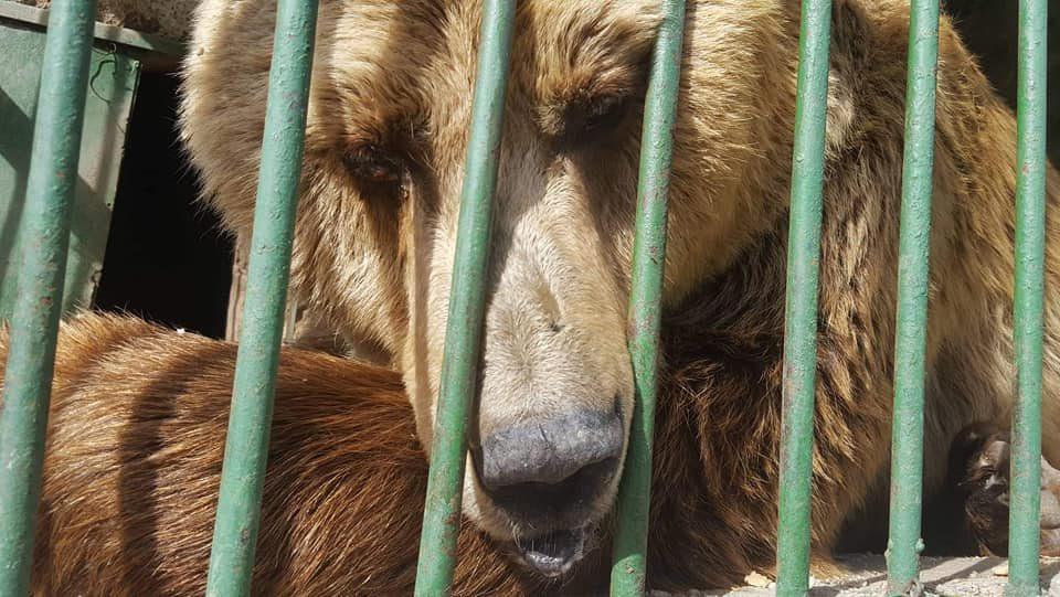 Мизерија во битолската зоолошка градина – животните едвај преживуваат
