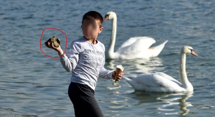 Тажна слика од Охрид: Дете со камен по лебеди
