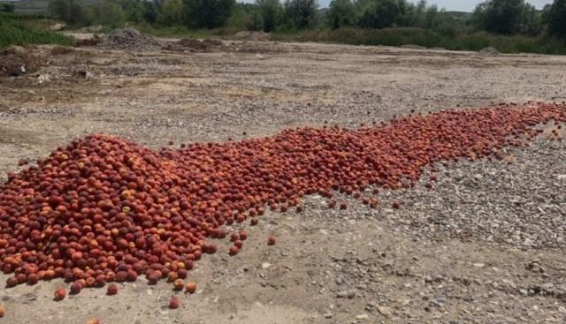 Мицкоски: Луѓето ги сечат овошките и фрлаат јаболката зашто оваа власт ги извиси
