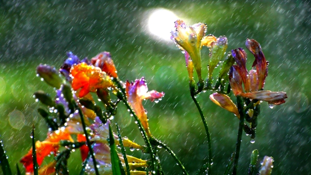 Променливо облачно со локални врнежи на дожд