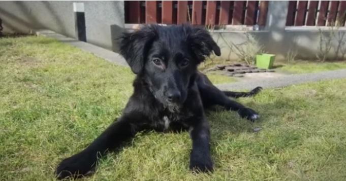 Американски пилот спасил повредено куче во Скопје, а потоа си го земал со себе