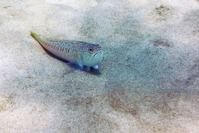 Осумгодишно момче нагазило на отровна морска риба во Паралија, среќа лекарите интервенирале навреме