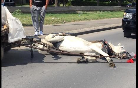 Уште еден коњ колабираше на улица во Скопје