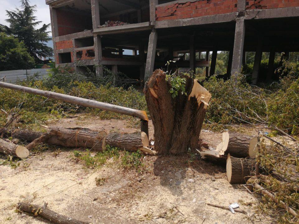 """Ќе се гради хотел на шест ката, исечени дрвјата кај СРЦ """"Кале"""""""