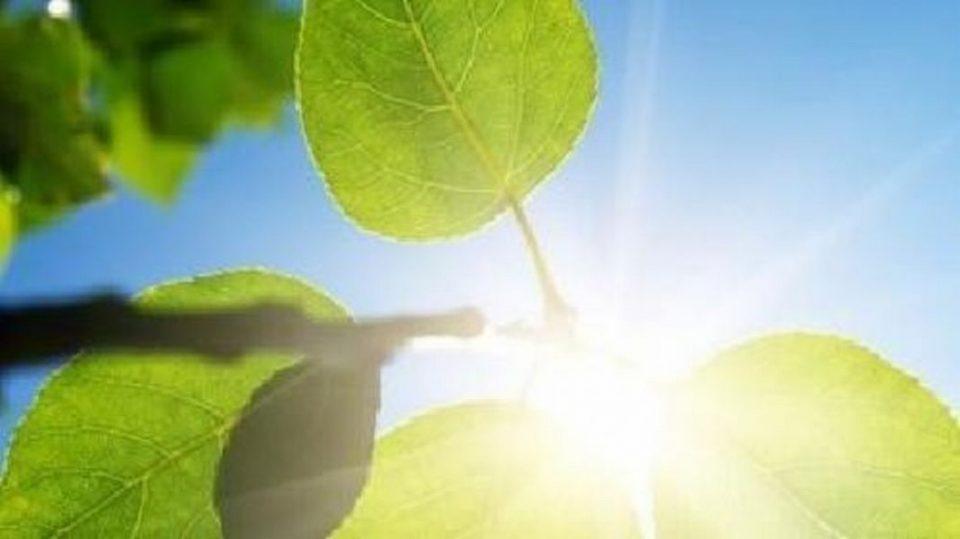 Сончево со температура до 36 степени