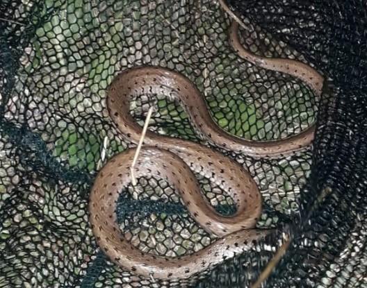 Преплашени рибари: Тргнале по риба, фатиле змија во мрежата