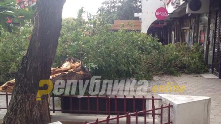 Ветрот корнеше дрвја во Скопје
