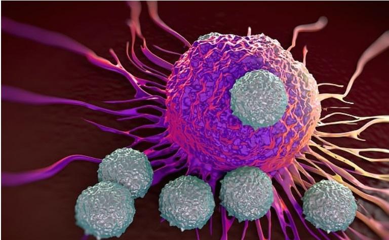 Идентификувани четири ретки смртоносни вируси во Турција