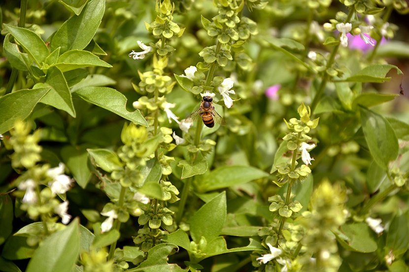 Растение кое секој треба да го набави овој август: Привлекува љубов, пари и штити од зло