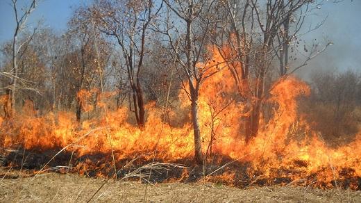 Пожар во Карбинци