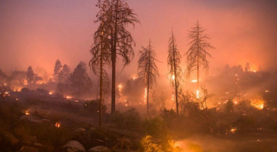 Планетата стравува од последиците додека горат светските шуми