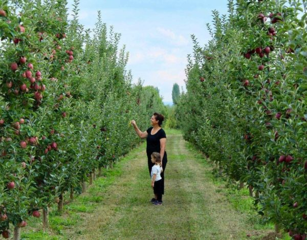 """""""Spirit of Prespa"""", фарма во Царев Двор oд каде гостите си одат со полни кошници цреши и јаболки и уште пополна душа од природна убавина!"""