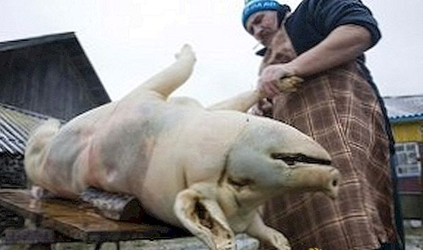 Нема веќе колење свињи и телиња по дворови