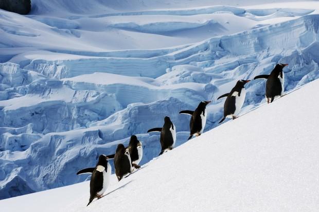 ОН: Последниве пет години најтопло на планетава!