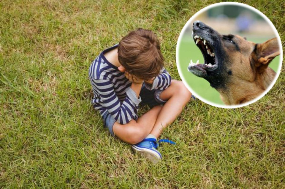 Куче искаса дете за уво