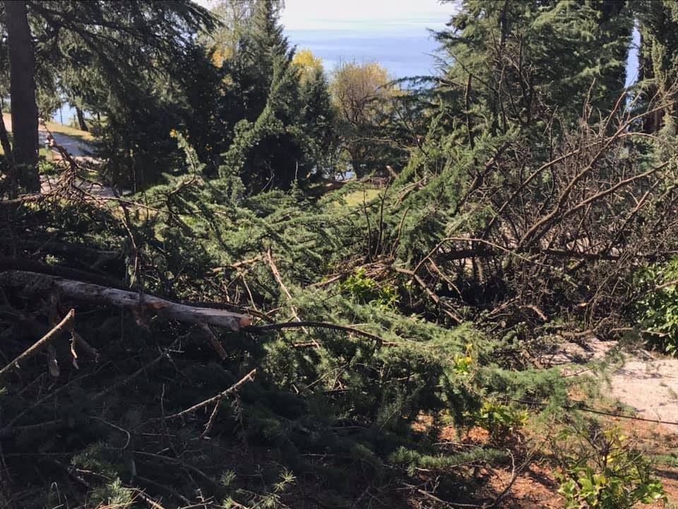 Охрид SOS: За вечниот конфликт на Општина Охрид со дрвјата