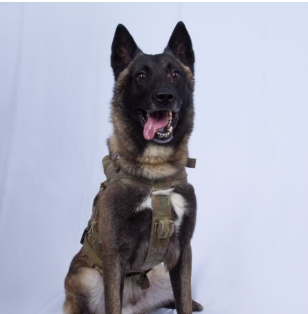 Полесно е рането: Oва е кучето што учествуваше во ликвидацијата на Ал Багдади