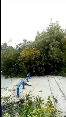 Масовна сеча на дрвата во Куманово, граѓаните револтирани