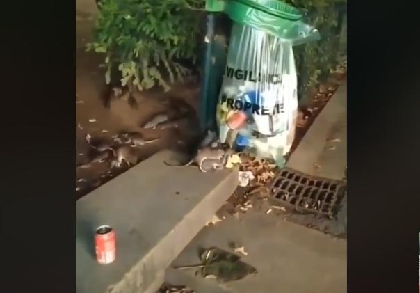 Само уличните мачки можат да нè спасат да не станееме Париз