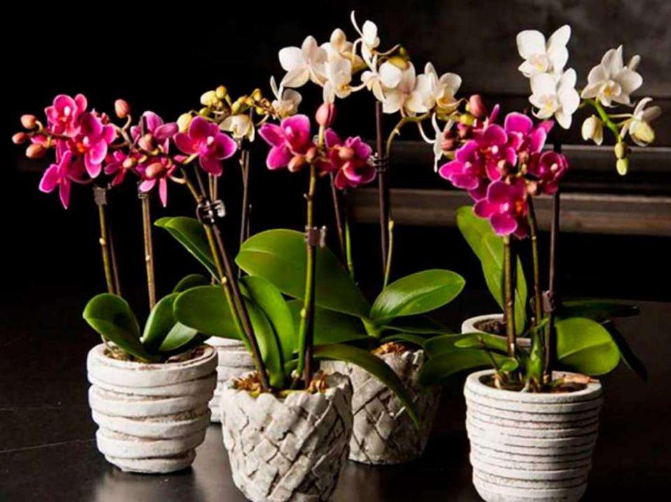 Орхидејата може да цвета во текот на цела година: Само мора да го направите ова!